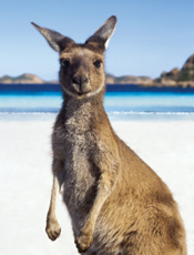 WMU-Cooley Australia/New Zealand Study Abroad Program